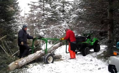 Three Common Risks Associated with the Forestry Industry