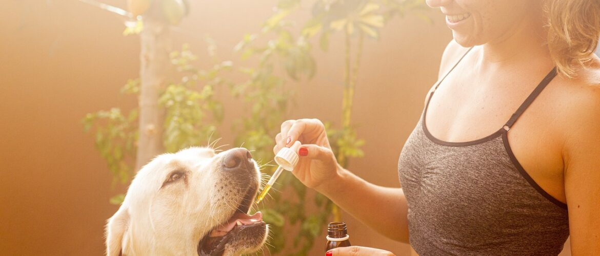 Benefits And Uses Of Full Spectrum Cbd Oil Canada For Adults