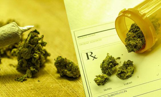 Difference between marijuana and recreational marijuana explained